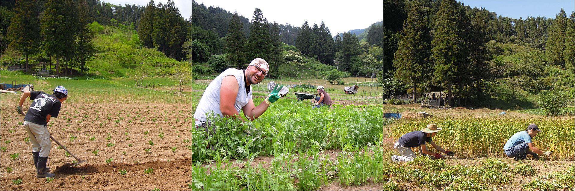 photo_farm_02